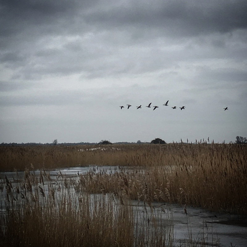 Canada Geese | A Day Off | Blog | Charles Moseley | Cambridge Writer