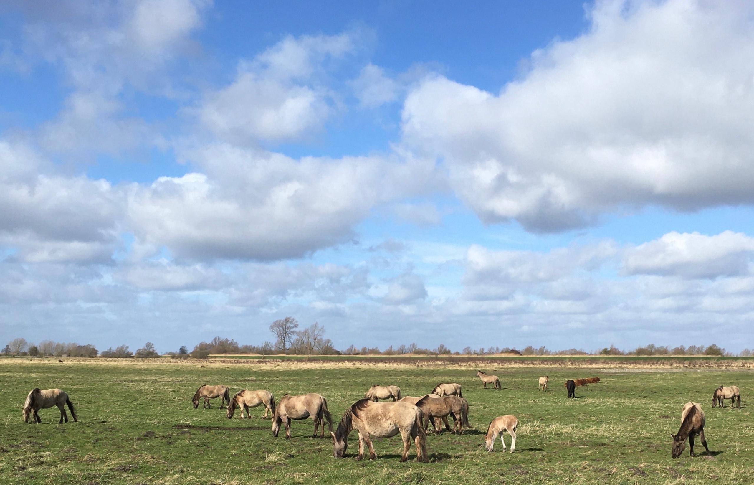 Charles | Moseley | Coronavirus | Spring | Blog | Covid19 | Lockdown | Cambridge | Writer | Konik | horses
